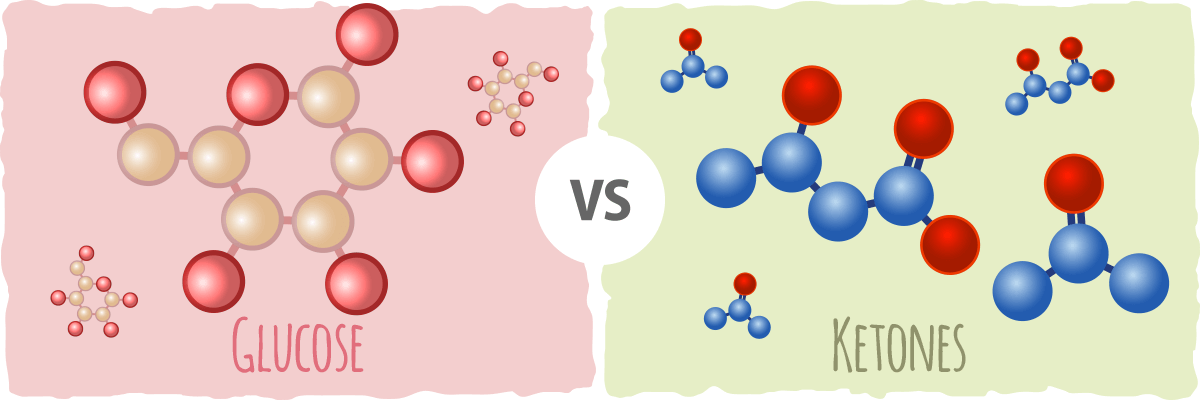 How our bodies use ketones for energy instead of glucose