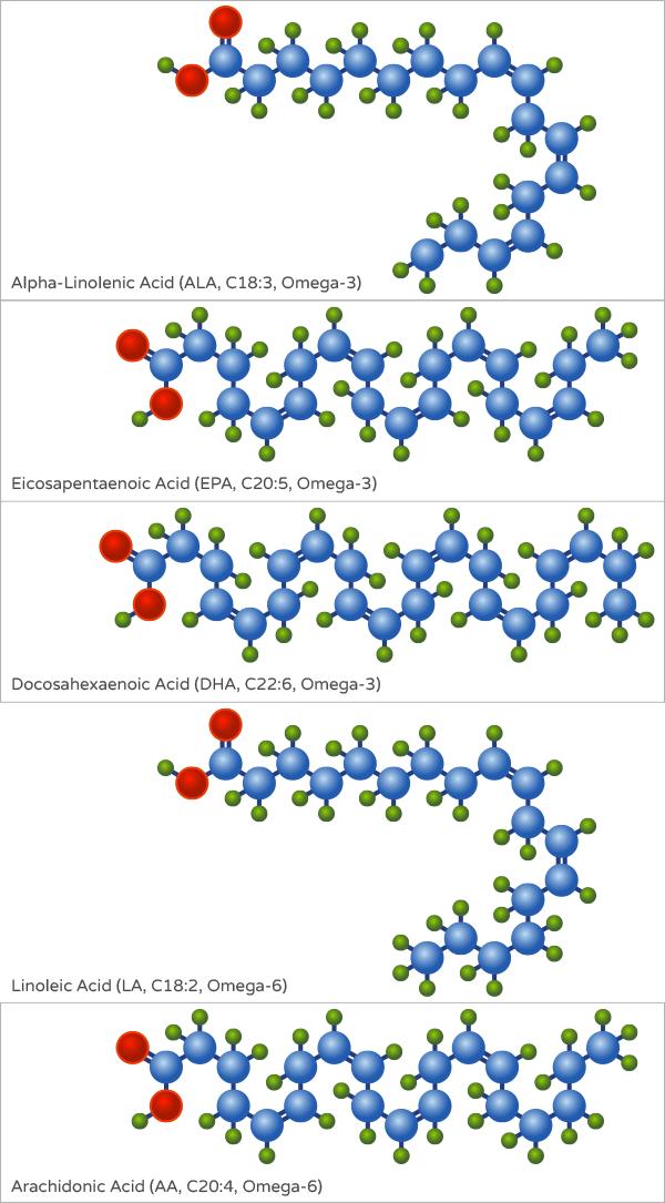 Structure of omega 3 and omega 6 fatty acids