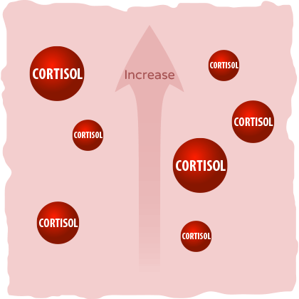 Cortisol levels increase in your body.